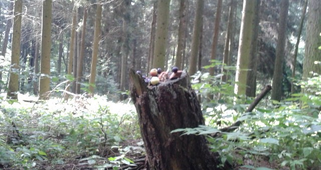 Overvloed in het bos